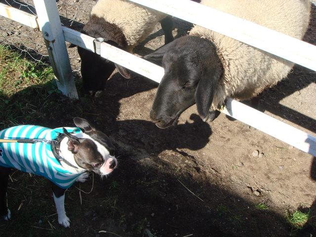 黒羊さんと僕。