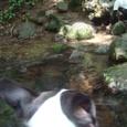 ⑥尚仁沢の湧き水