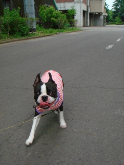 朝一の散歩は気持ちいぃ☆